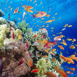 gambar dunia bawah laut, dunia air, gambar ikan, ubur-ubur