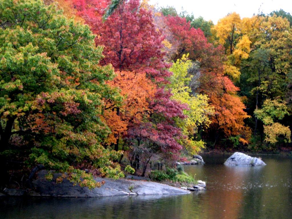 http://1.bp.blogspot.com/-ZaoXT4aX6H0/TpC-AyMKYCI/AAAAAAAAAK0/Krc9yeHspTM/s1600/autumn+wallpapers+%252813%2529.jpg