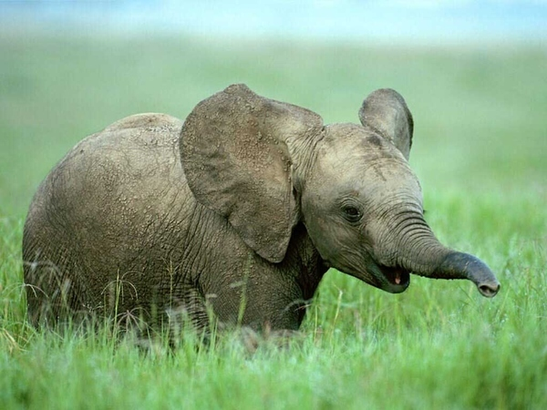 cute animal pictures - elephant