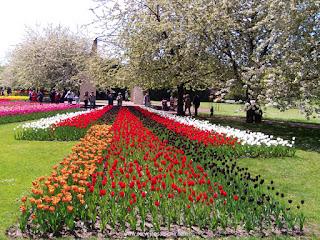 um mar de tulipas
