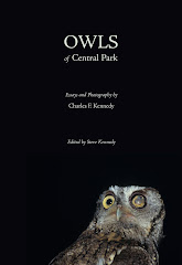 Owls of Central Park