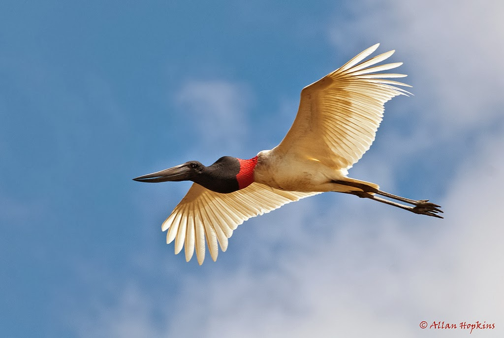 Getting Exposures right while Photographing Birds in Flight