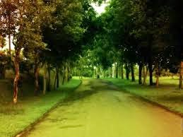 GREEN VILLAGE ROAD WALLPAPER