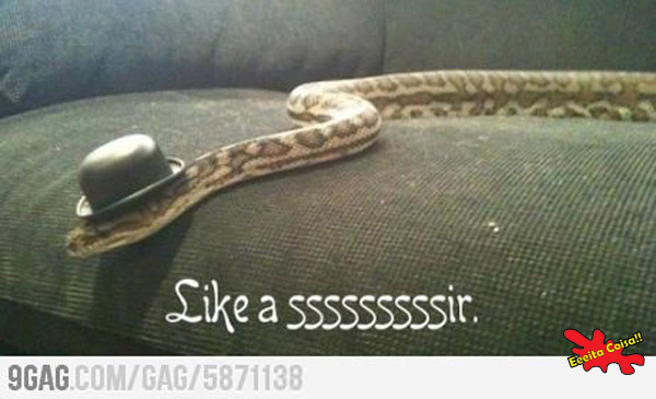 cobra, like a sir, eeeeita coisa