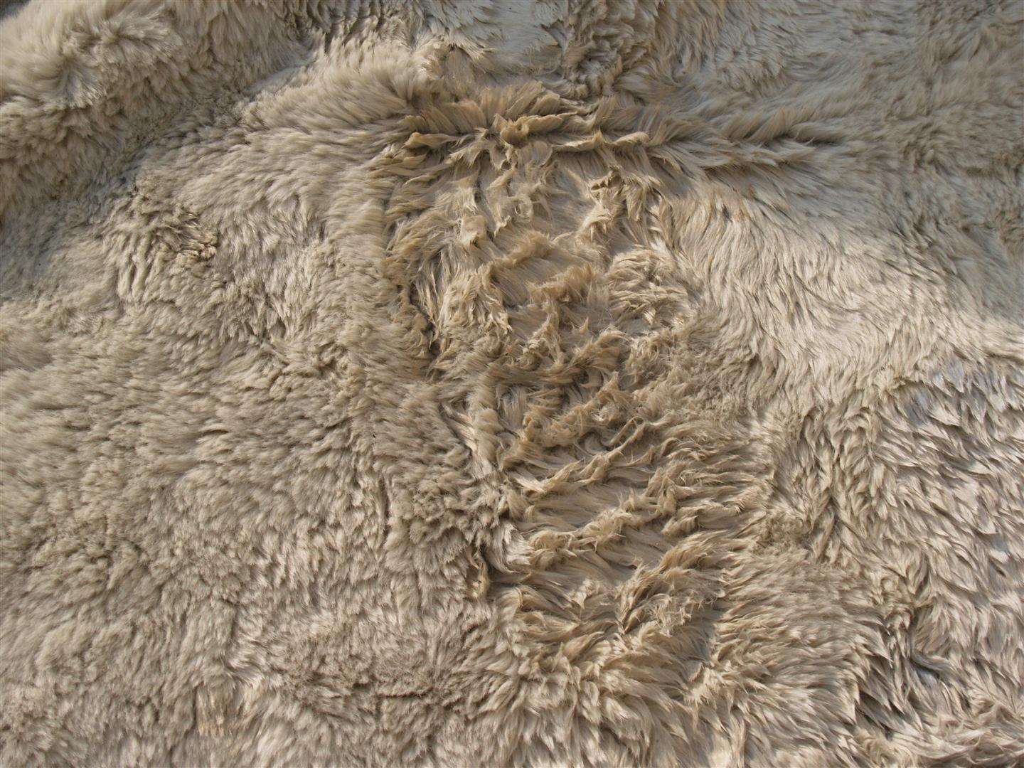 Rug master sheepskin rug cleaning for Sheep skin rug