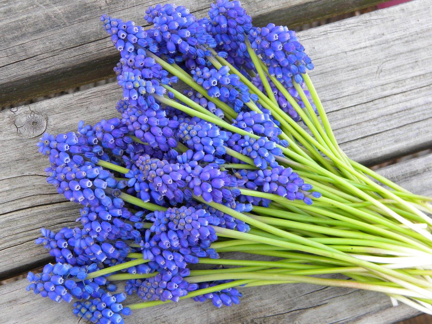 Wedding flowers from springwell beautiful blue anemone and muscari wedding flowers from springwell izmirmasajfo