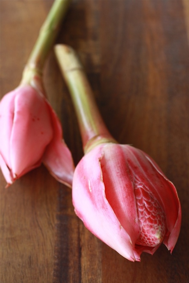 torch ginger flower or bunga kantan malaysia