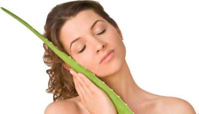 manfaat-lidah-buaya-untuk-rambut