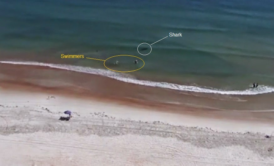 Webcam records shark chasing swimmers out of the water in Daytona Beach Florida