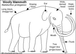 Wholly Mammoth