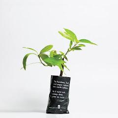 Plante uma árvore...