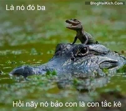 Ảnh cá sấu, tắc kè hài hước nhất