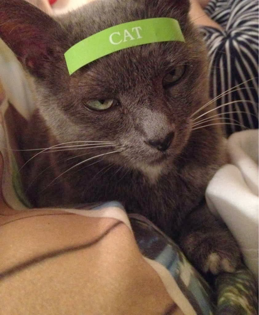 Funny cats - part 86 (40 pics + 10 gifs), cat with cat label on his head