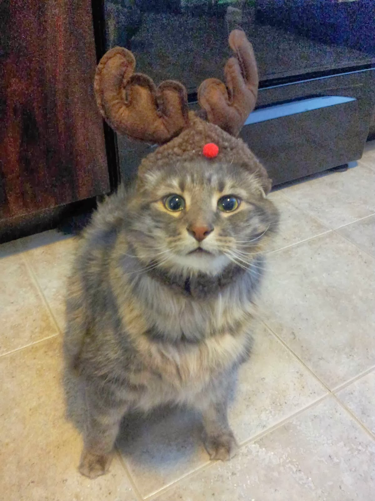 Funny cats - part 82 (40 pics + 10 gifs), cat photo, cat wears antler hat