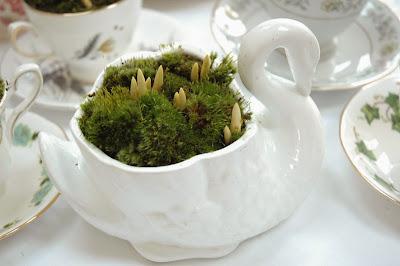 Swan planter with crocus bulbs - a one off from tuckshopflowers.com