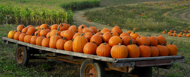 Medicine Benefits and Quality of Pumpkin