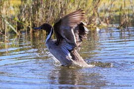 Mi otro Blog: Fotografía de Aves y otros Seres Vivos