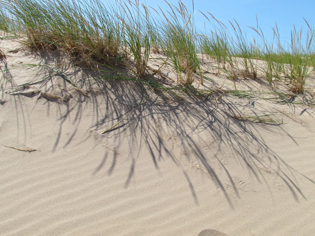 Dune Grass at Sleeping Bear Dunes (photo by J. Schechter)