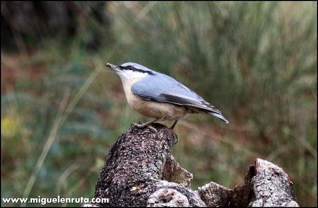 Hide-Ornitología-Hostal-Almanzor-Gredos_2