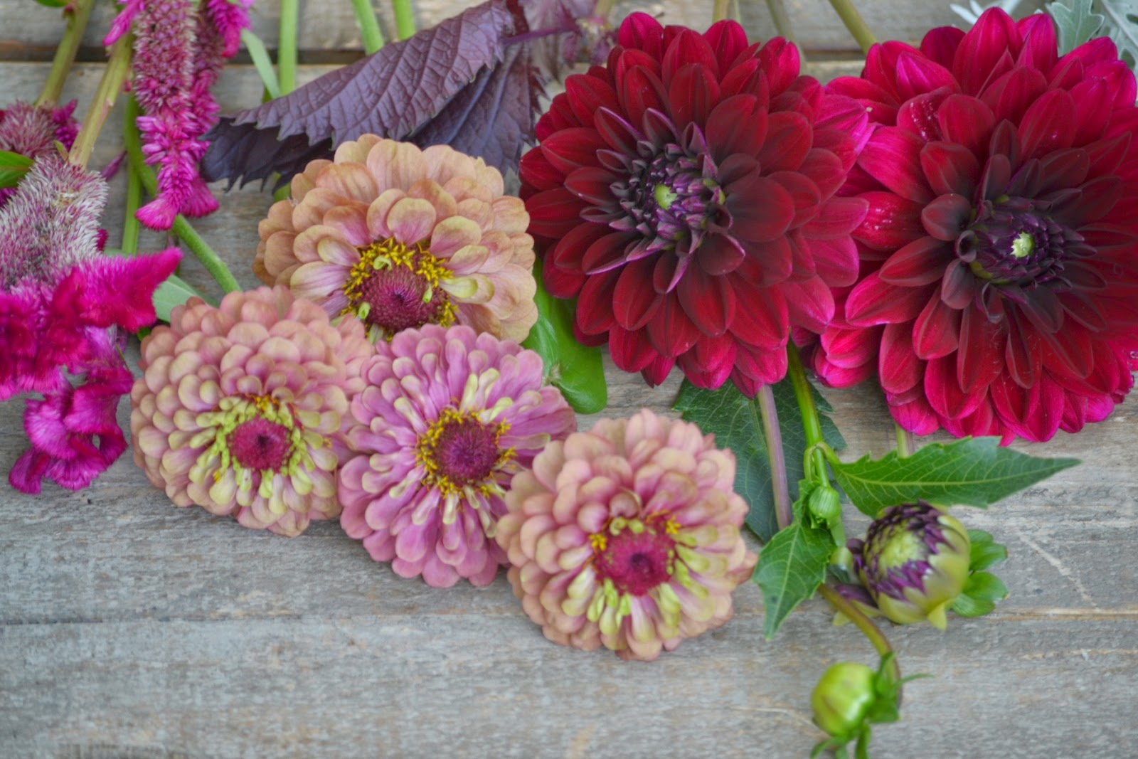 Wedding Flowers From Springwell Summer Dahlias And Zinnias