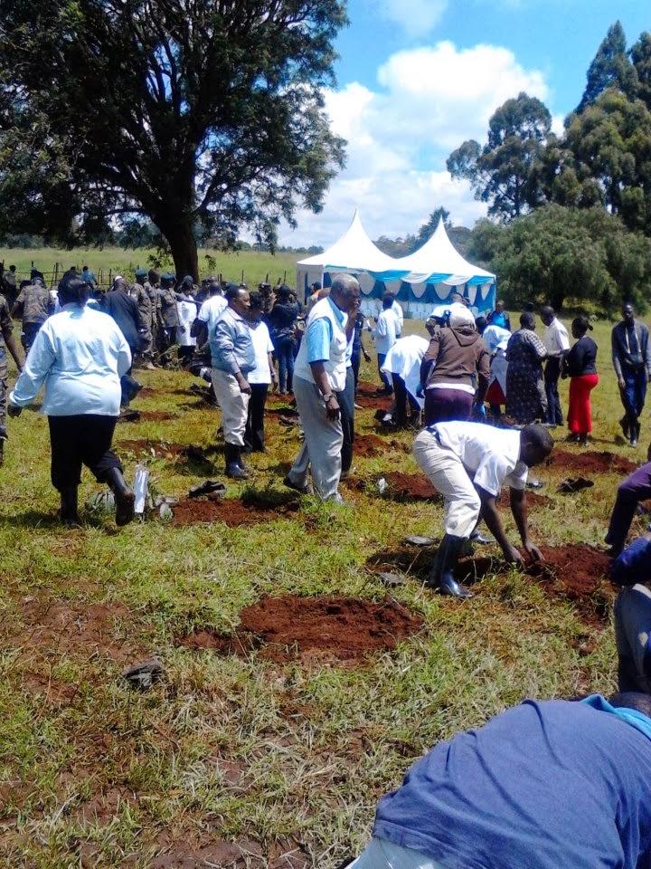 tree planting vet-farm
