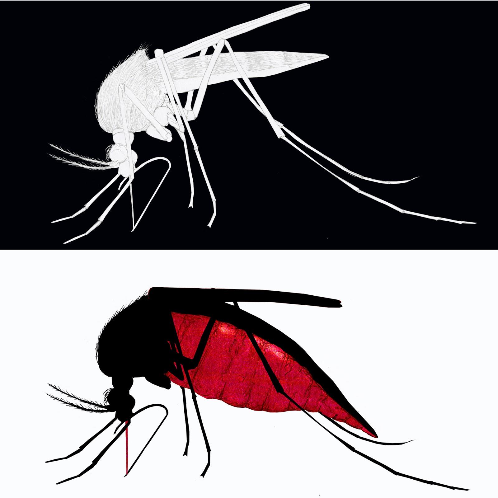 mosquito antes y después, dibujo