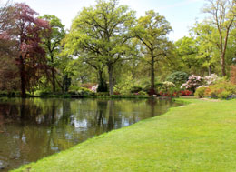 Plantes de jardin japonais - Plantes jardin japonais ...