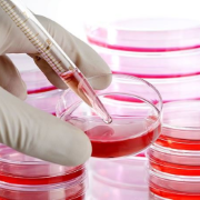 Pro-Cellule Staminali