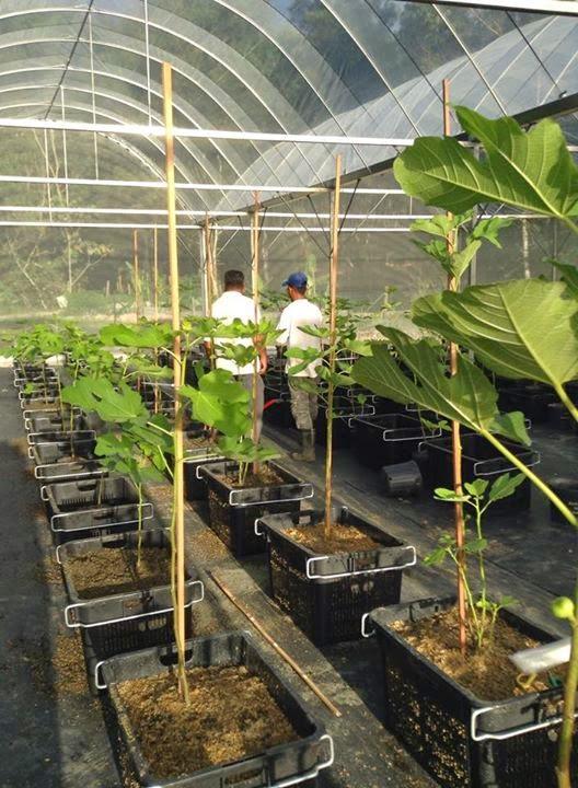 Figs Rain Shelter House Dato Syed Elias