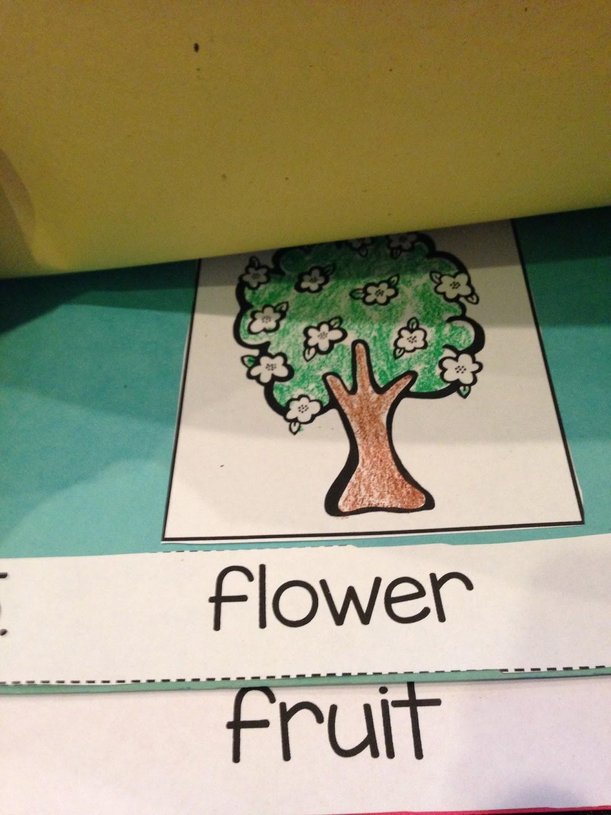 apples week, kindergarten apple unit, apple life cycle