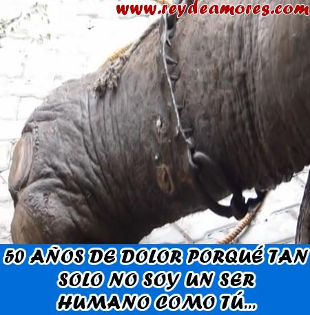 elefante raju liberado