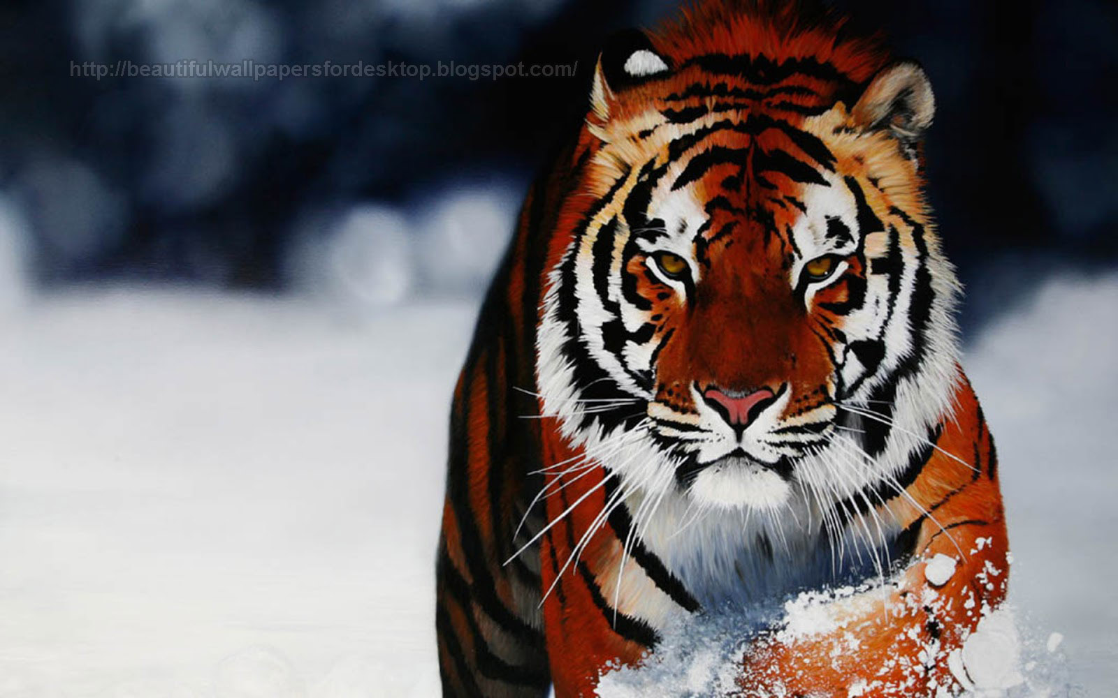 Animal Wallpapers Download for Free