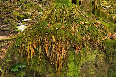 El Yunque: Arboles Grandes Trail