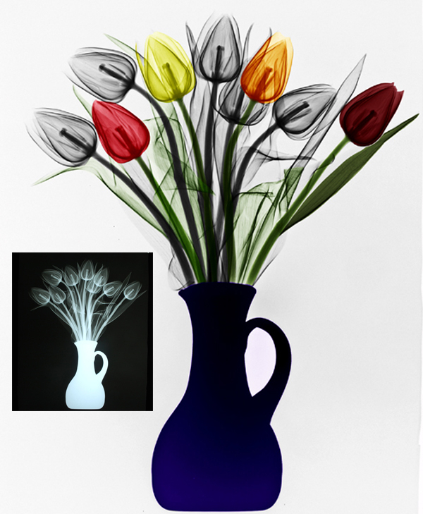 01-Tulips-Arie-van-t-Riet-Colored-X-ray-Photographs-of-Nature-www-designstack-co