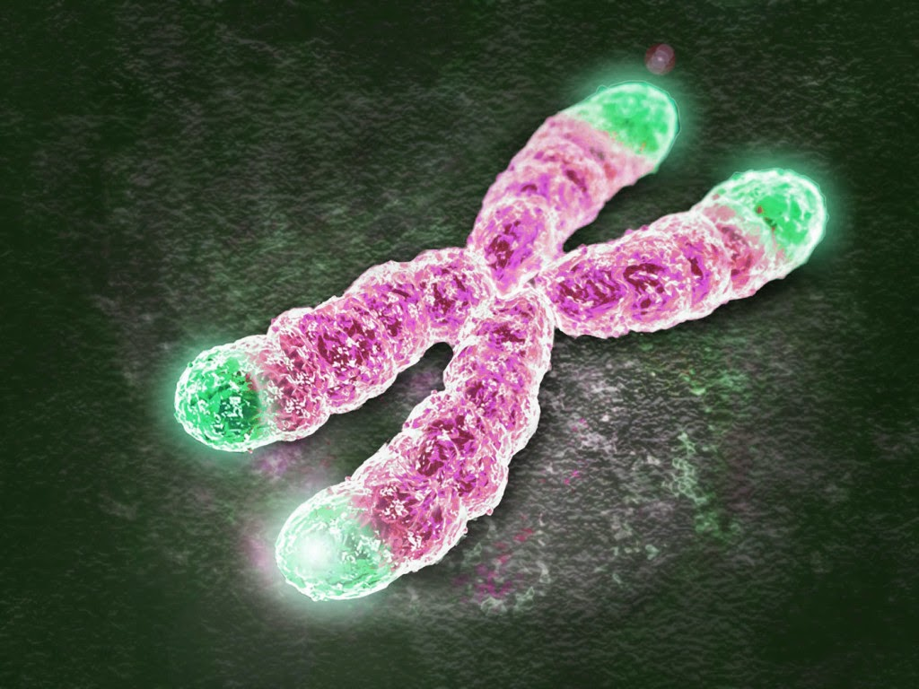 Scientists Extend Telomeres To Slow Cell Aging