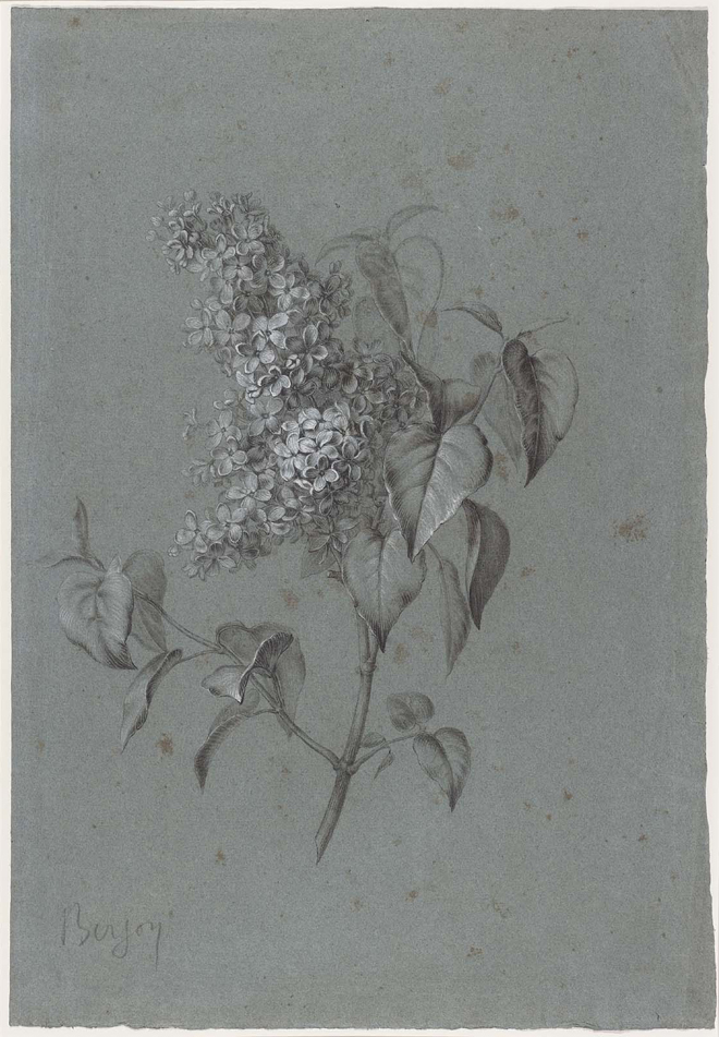 Floral Study (Lilacs), Antoine Berjon, 1754–1843