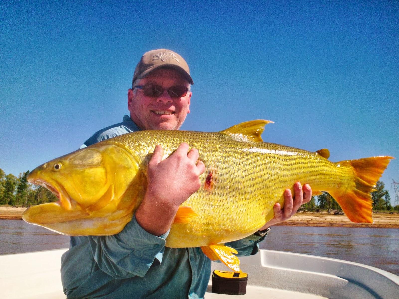 The fishing news redhot action for monster golden dorado for Golden dorado fish