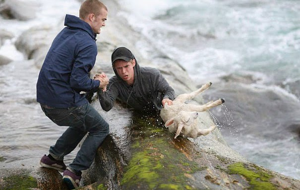 20+ Photos That Will Restore Your Faith In Humanity - Two Norwegian Guys Rescuing A Baby Lamb Drowning In The Ocean
