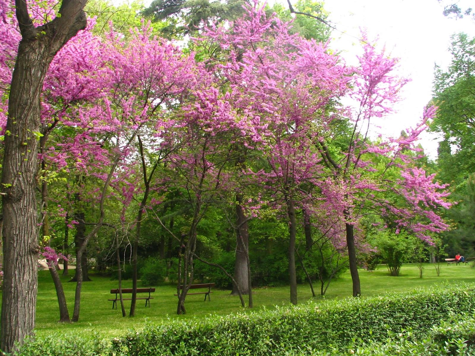 Quien a buen rbol se arrima for Arboles de flores para jardin