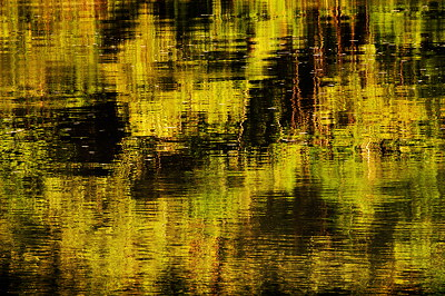 Abstract photo of a forest reflected in Rhône river