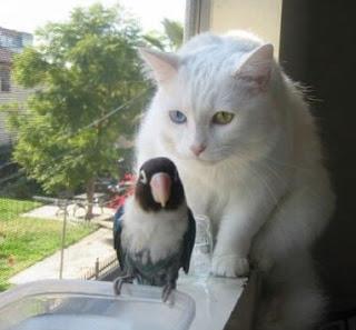Pássaro em risco de vida