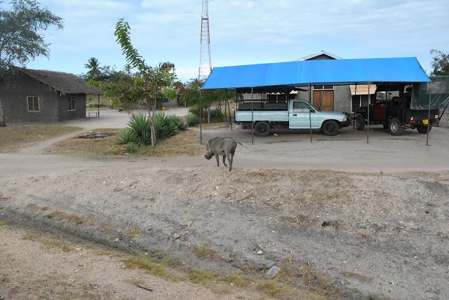 Saadani National Park, Bagamoyo - Tanzania