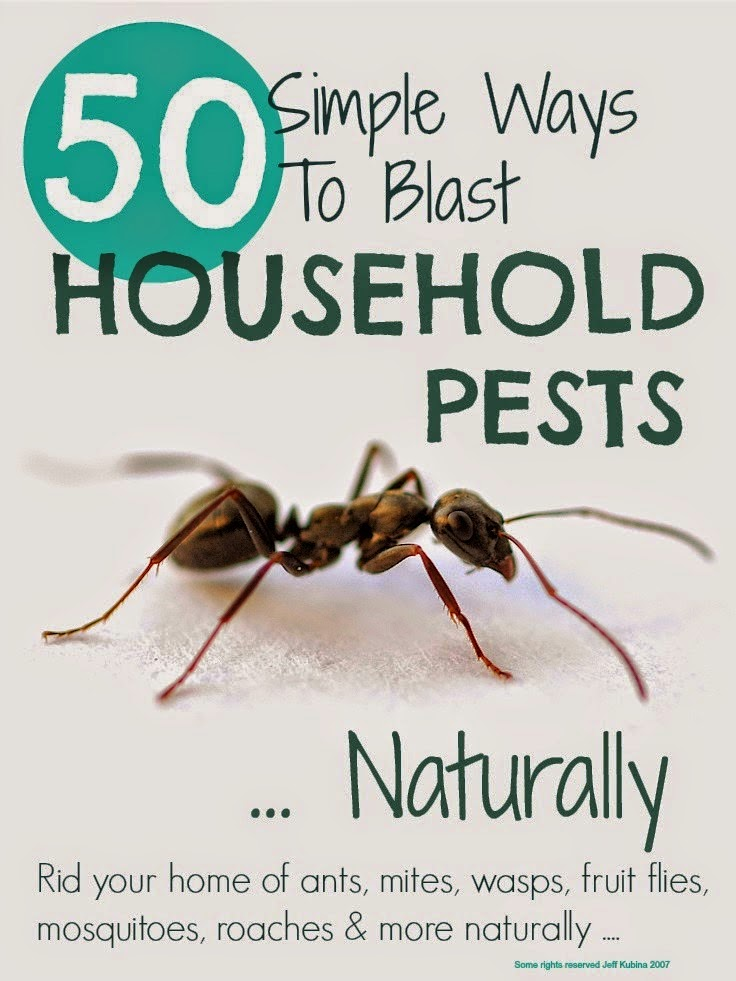 Get rid of household pests naturally diy craft projects for Getting rid of stuff minimalist