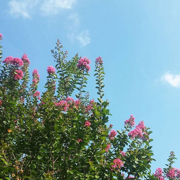 pink flowers, instagram, blue sky,