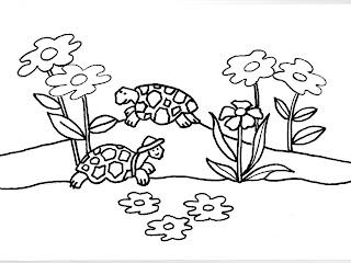 Desenhos Para Pintar As Tartarugas