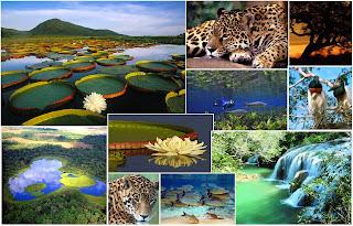 Pantanal Documentário
