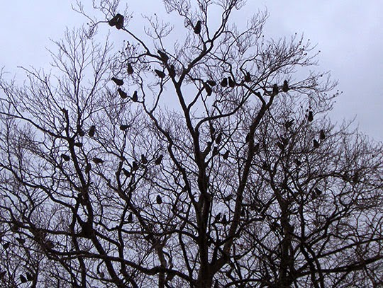 birds in a tree, urban photography, contemporary, photo, art