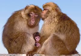 Os Monkeys Também Protegem