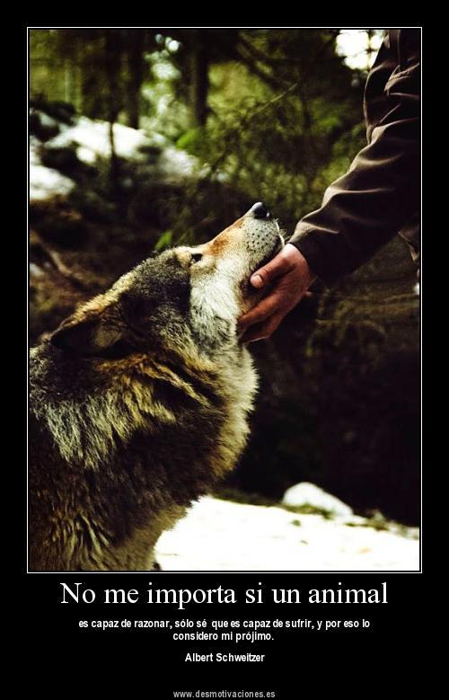 imagenes de amor animales - Imágenes de Ositos Imágenes de Amor