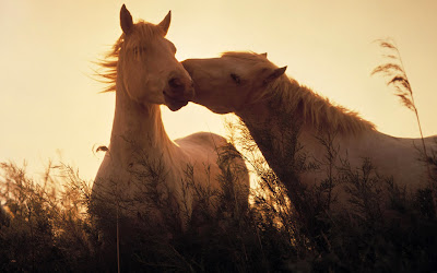 Horses Wallpaper For Desktop